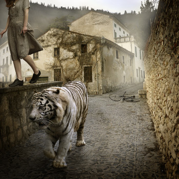 Tom Chambers photography Tiger Italy color photograph magical realism