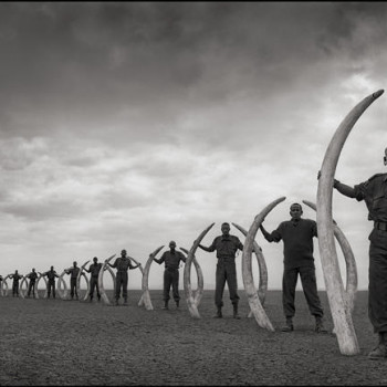 Line of Rangers with Tusks, Nick Brandt
