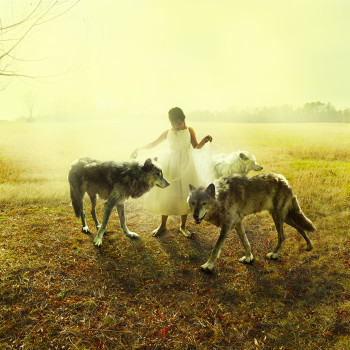 Wolves photography photo montage Tom Chambers