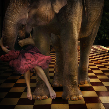 photomontage Elephant girl color photography
