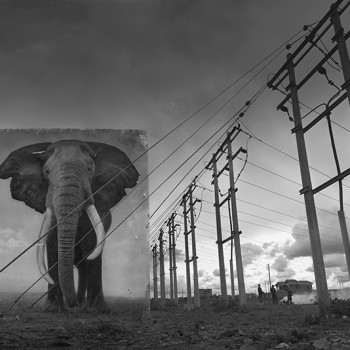Inherit the Dust African animal photographs contemporary photography sun valley idaho