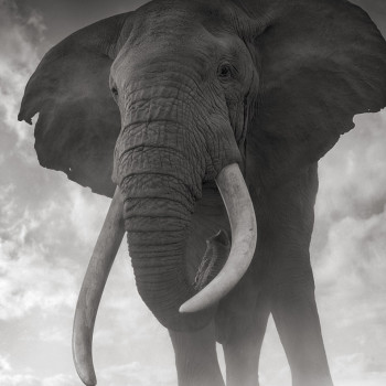 African animal photographs contemporary photography, sun valley idaho gallery