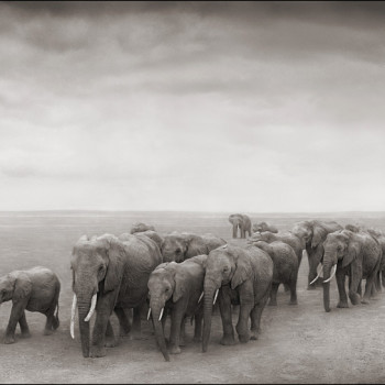 African animal photographs Nick Brandt contemporary photography african photography