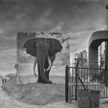 Iherit the Dust Africa photography african wildlife contemporary sun valley art gallery