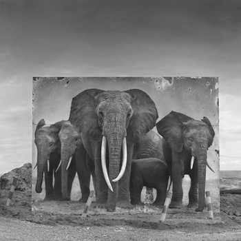 African wildlife contemporay photography sun valley art gallery