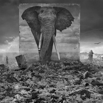 Inherit the Dust African animal phogographs contemporary photography sun valley idaho