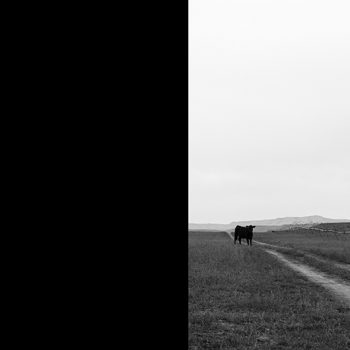 idaho photography landscape cows