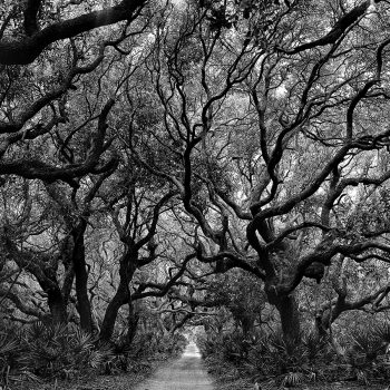 Black and white photography, trees