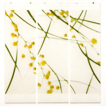 jeri eisenberg, color photography of nature, subtle photographs, material and methodology