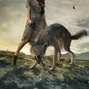 wolf in contemporary art, tom chambers photographer, gilman gallery, ketchum idaho