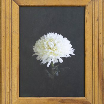 floral photography, vintage frame, jefferson hayman, gilman contemporary