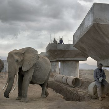 Nick Brandt, This Empty World, color photography, elephants, large scale photographs