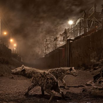 Nick Brandt art for sale, hyenas in art, large production photography